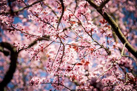Springtime Sadness: Tips on How to Survive Allergy Season