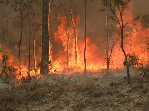 Opinion: The Australian Bushfires-- More Than Meets The Eye