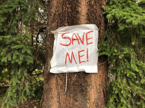 Save Shoreline Trees: A Community's Effort to Preserve Local Nature