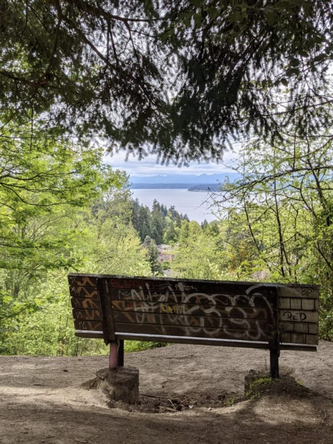 An important step of forest bathing is finding a spot to sit and observe.